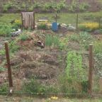 Plan Your Homestead Potager Garden Location