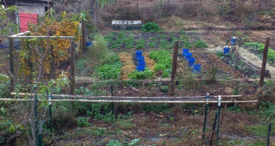 Garden Beds 1