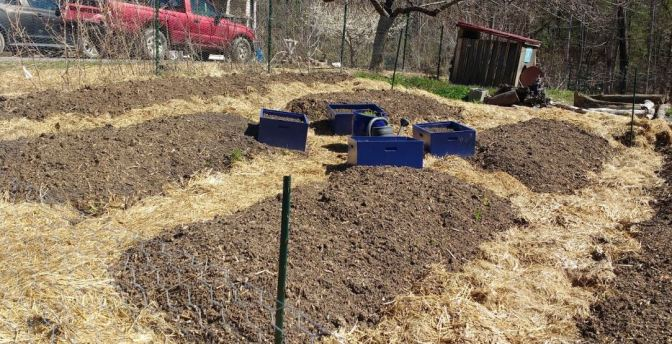 Garden Beds with Paths