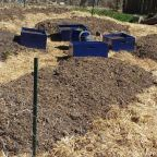 Pathways For Your Homestead Potager