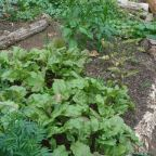 Easy Composting for Your Organic Garden