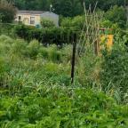 Vegetable Garden Planting Calendar