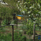 Potager Gardening in a Crisis