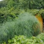 Carbon Gardening
